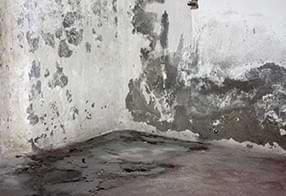 Combattre et traiter les murs de cave humides